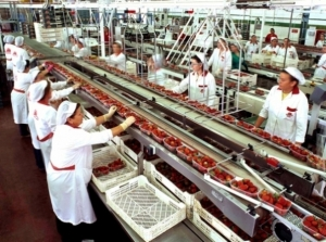 9 Million Jobs in Food Processing Sector by 2024