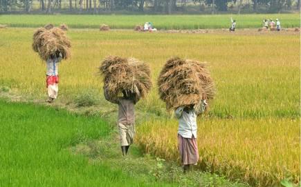Efforts To Ensure Fertilisers Availability During Kharif 2021 Season